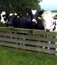 Agri-Cutting-&-Grazing-Long-Term