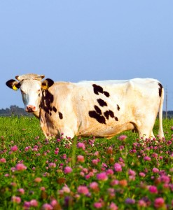 Agri-Cutting-&-Grazing-Red-Clover-3-Year