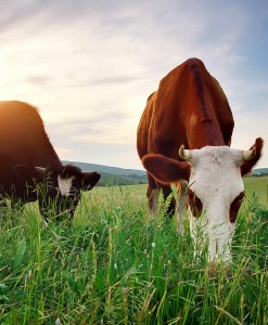 Agri-Long-Term-Grazing-Permanent-Grassland