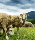 Agri-Long-Term-Grazing-Traditional-Graze-&-Hay