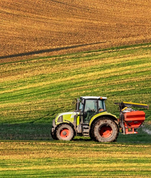 Agricultural Grass Seed For Overseeding