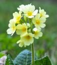Native Wild Flower Seeds for Dry Soil