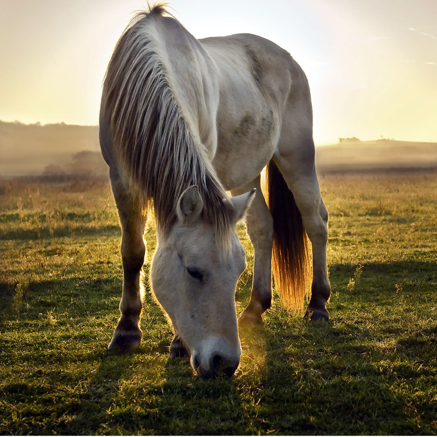 Horse Pasture Grass Seed Supplier