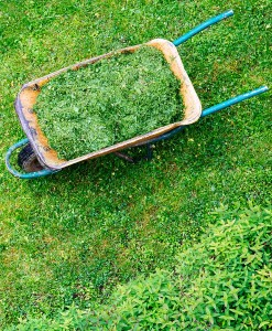 Cut Compost Green Manure Seed