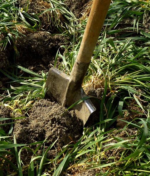 Green-Manure-Italian-Rye-Grass