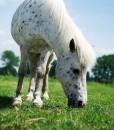 Quality Equine Pasture Seed