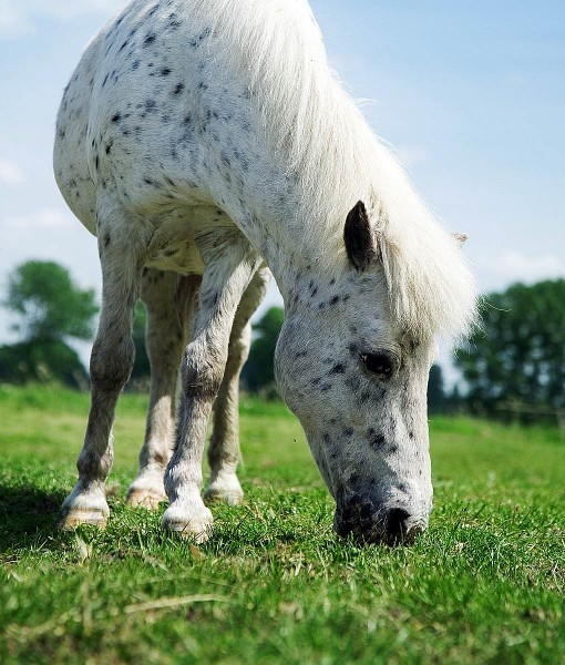 Quality Horse Pasture Seed