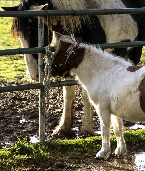 Equine Gateway Repair Seed For Horse Pasture & Pony Paddock