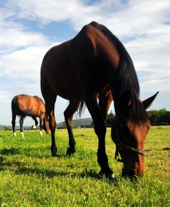 Equine Pasture Seed For Clay Soil