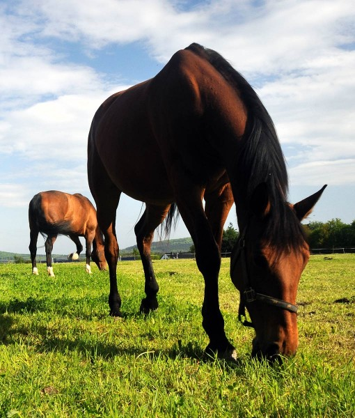 Pasture Seed For Clay Soil