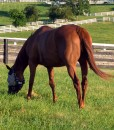 Drought Resistant Equine Pasture Seed For Dry Soil