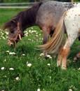 Horse Pasture Herb Seeds