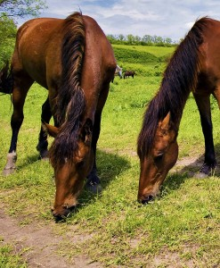Horse Pasture Overseeding