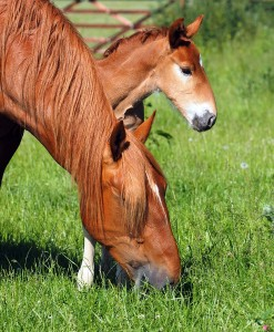 Horse-&-Pony-Non-Ryegrass-with-Herbs