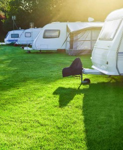 Campsite, Car & Caravan Park Grass Seed