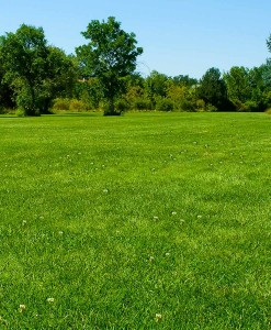 Bulk Grass Seed For Parkland Areas & Public Sites