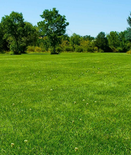 Grass Seed For Parkland