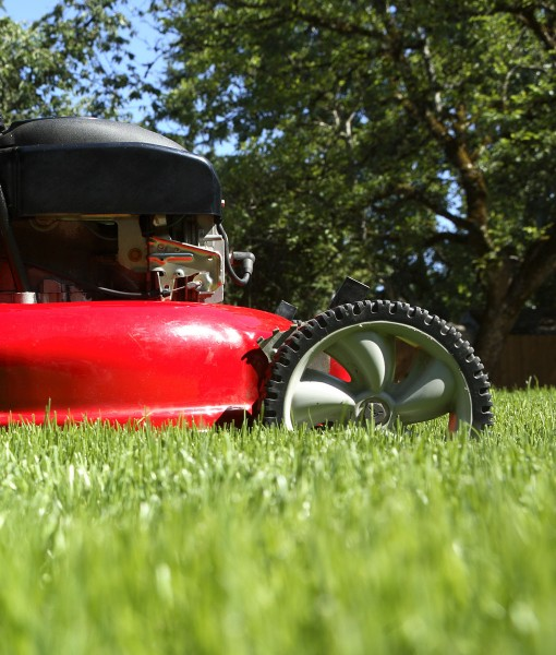 Lawn-Seed-Low-Maintanence-Lawn