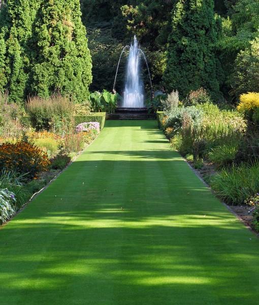 Lawn-Seed-Ornemental