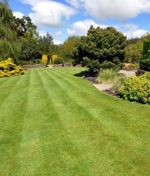 Quality Hardwearing Lawn Seed