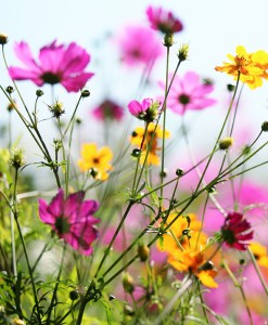 PURE WILDFLOWER SEEDS