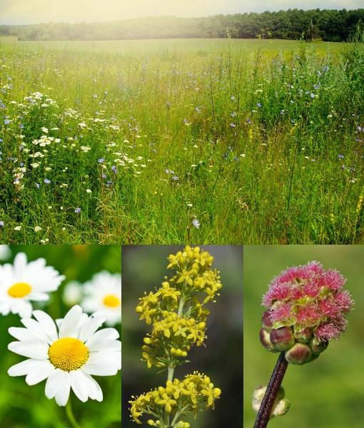 Economy Wildflower Meadow Seeds