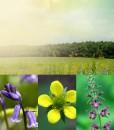 Woodland Wildflower Glade Seeds