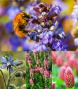 Flowers for Bumble Bee and Butterflies