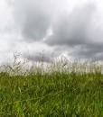 Basic Meadow Grass Seed Economy Meadowgrass